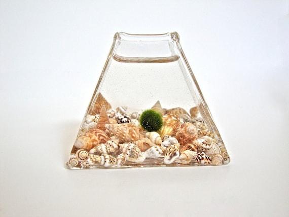 Little Marimo Moss Ball Glass Pyramid / Submarine Moss Terrarium with Seashells