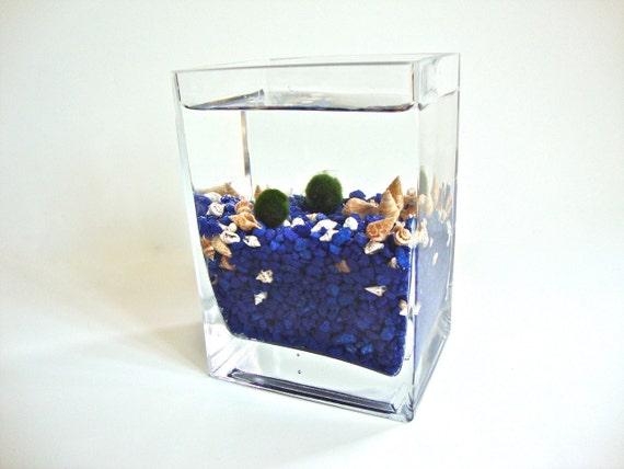 Two Marimo Moss Balls Rectangular Glass Vase Aquarium, Marimo Ball Rectangular Vase Aquarium