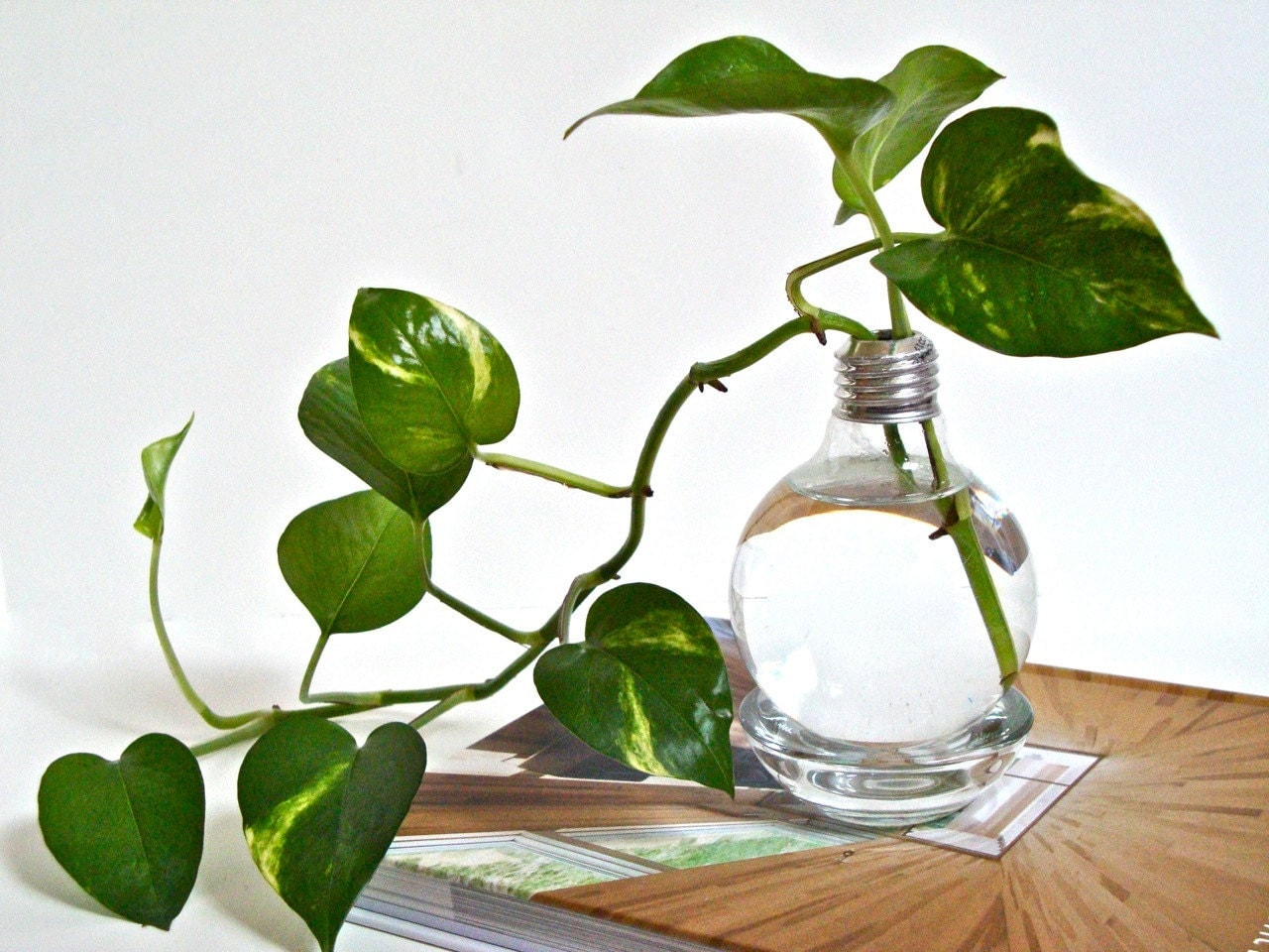 Lightbulb Vase With Clear Base Light Bulb Home Decor