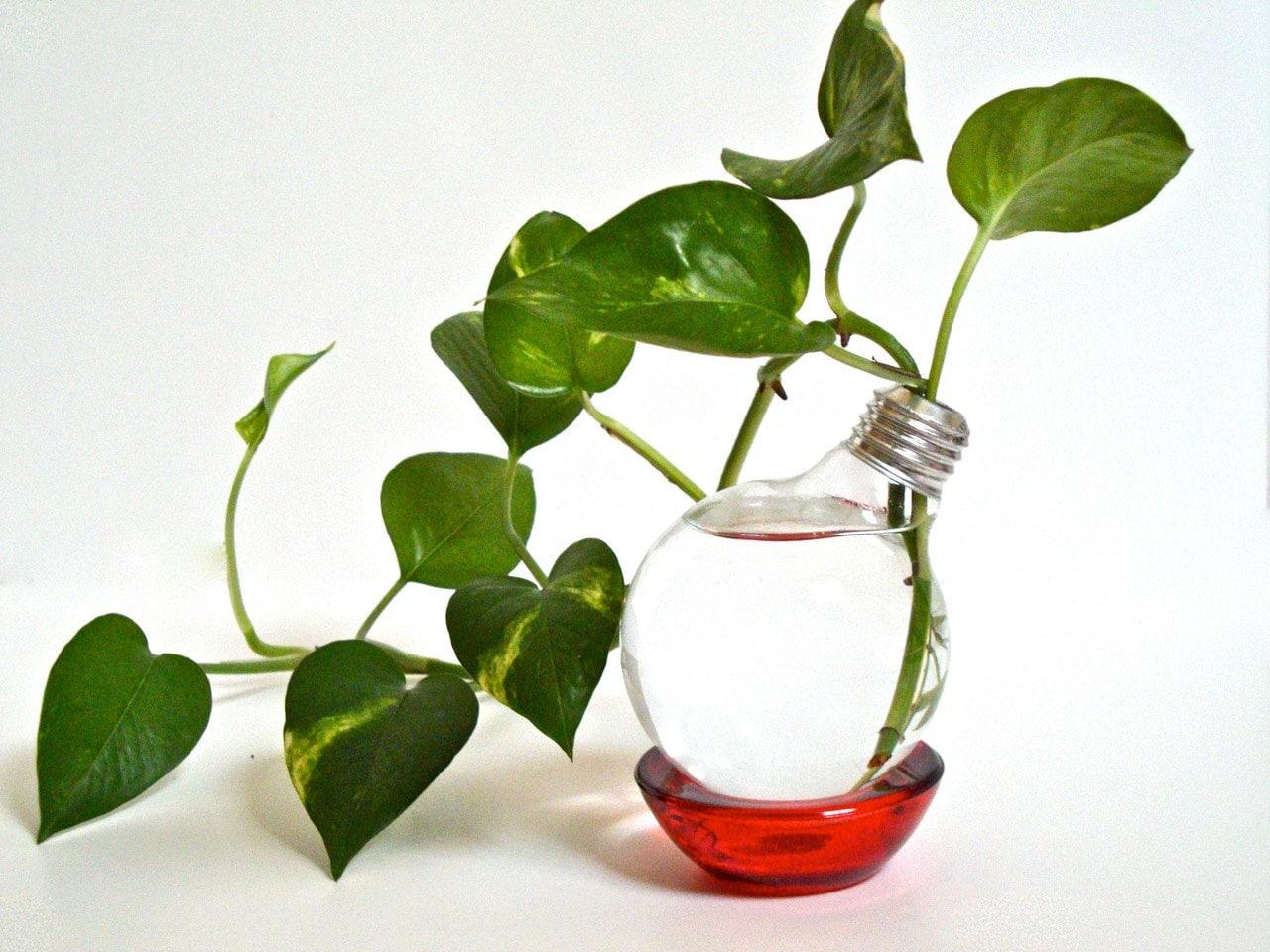 upcycled lightbulb vase with red base light bulb vase light. Black Bedroom Furniture Sets. Home Design Ideas