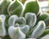 Lil' Cactus