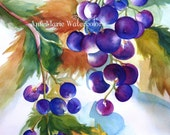 "Harvest Grapes 8"" x 10"" signed watercolor giclee print - still life"