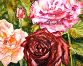 "A Rose is a Rose watercolor note cards, set of four, blank inside, 5""  x 7"""