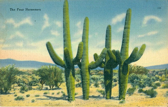 Cactus Postcards Vintage Arizona Postcards All Different