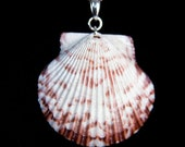 Caribbean Shell Pendant