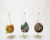 Sale: 15% off Terrariums - A set of 3 teardrop shaped terrariums with jewel toned succulents and reindeer moss