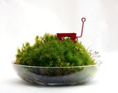 A little dish of moss and a red wagon - all under a long, tall, gorgeous bell jar.