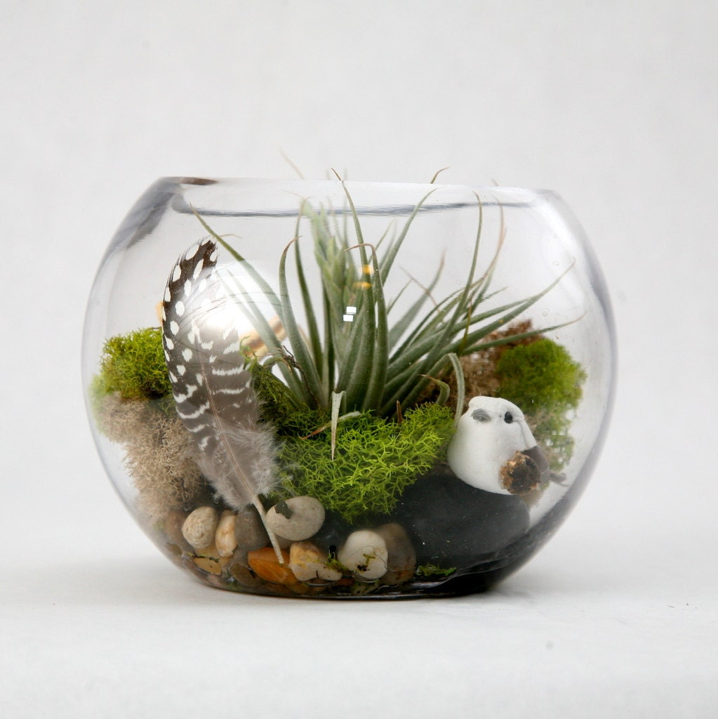 air plant terrarium a natural history by tallpoppygardens on etsy. Black Bedroom Furniture Sets. Home Design Ideas