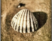 She sells sea shells - beach photo - sandy golden brown yellow faded seaside