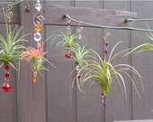 Assorted (3) Pack - Air Plant Hanging Window Ornaments - Unique Gift Spring Birthday Gift For Mom Gifts under 50