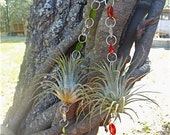 Air Plant Hanging Window Ornaments- Assorted 2 pack - Unique Gift  Spring Birthday Gift For Mom Gifts under 30
