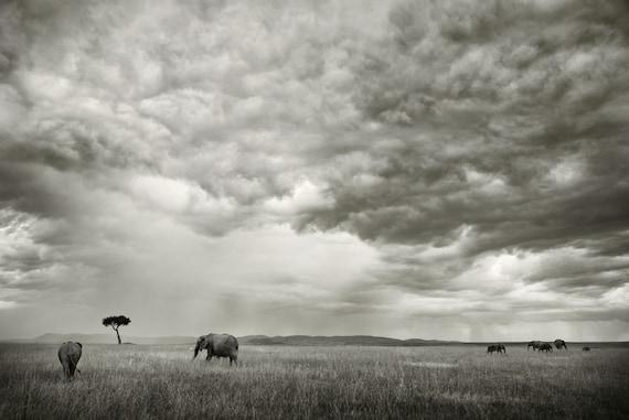 Elephants in the Midst, Kenya. 12x18 Fine Art Photograph