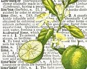 Lime SQUARE Dictionary Art Print, Original Design, FREE SHIPPING