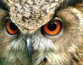 WHO WHO - Eurasian Eagle-Owl No. 3 - Fine Art Photograph