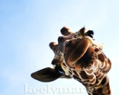 Hello Giraffe - 11x14 Print - OTHER SIZES AVAILABLE on request