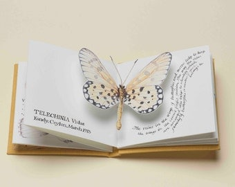 Butterflies - a limited edition handmade pop-up artist's book
