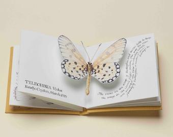 Butterflies - a limited edition handmade pop-up artist book