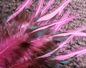 Pink Feathers, Rooster Feathers for Hair or Crafts