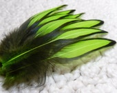 Craft Feathers, Lime Green and Black Neon Feathers