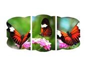 Butterfly Photo Print Series, Nature Photography Set, Orange Monarch Viceroy Art, Shabby Chic Bedroom Nursery Bathroom Home Decor Wall Art