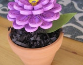 Small Quilled Purple Potted Zinnia Flower