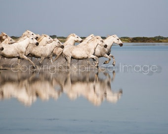 Fleet of white horses running through water blue neutral nautical water horse photography surreal imagery print photo