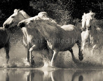 HORSES of the CAMARGUE - STARBOARD - Edition Print