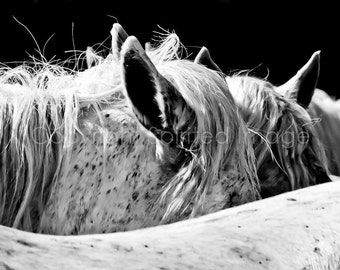 Horse Photography - HORSES of the CAMARGUE - WHISPERS - Edition Print - Black and White