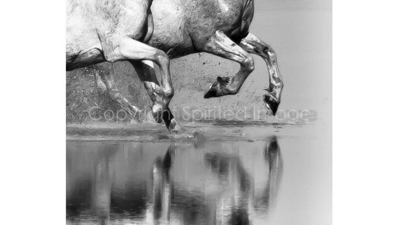 Horses of the Camargue - POINT - Edition Print, Black & White, Equine photography, Wall Decor