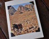 Photograph Note Card - Donkey in the Desert - Petra - Jordan