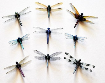Dragonfly Magnets Clear wing Set of 9 Insects Refrigerator Magnets Handmade