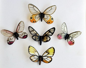 Butterfly Magnets Glasswings Set of 5 Refrigerator Magnets Insects Home Decor