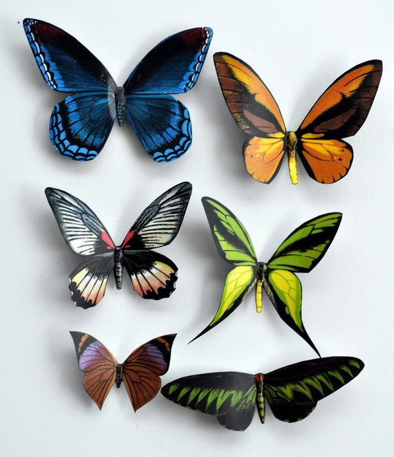 Butterfly Magnets Insects Set of 6 Refrigerator Magnets Home Decor Handmade