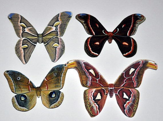Butterfly Moth Magnets Insects Refrigerator Magnets Wildlife Art