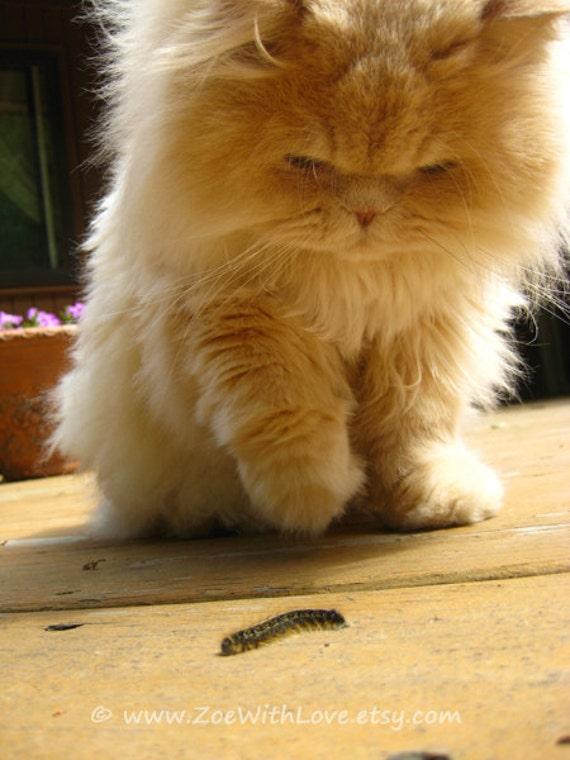 items similar  furry cat photograph persian kitty feline art furry cat wall print fine art