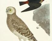 Owl Vintage / Owl Art / Rustic Decor / Decoupage Plate Wall Hanging / woodland art / bird vintage / natural colors