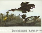70s Wall Art Bird Print Prints 401 and 402 Paper Ephemera, Very Fine Condition, Collectible, Home Decor
