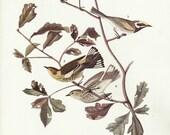 70s Wall Art Vintage Audubon Bird Print Plates 413 and 414, Paper Ephemera, Very Fine Condition, Collectible, Home Decor