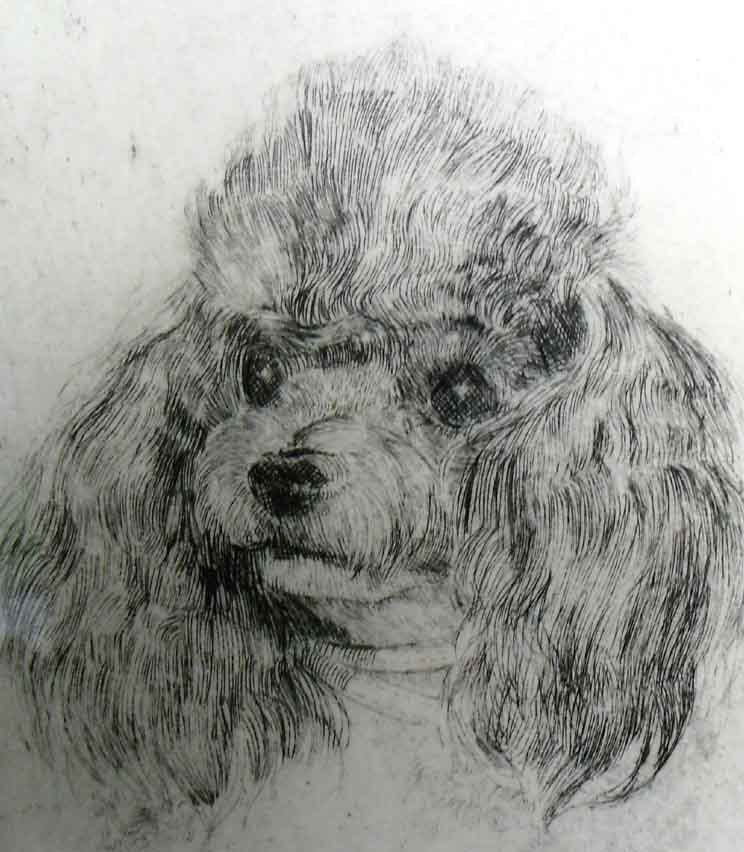 Toy Poodle Art Etching Signed And Numbered By Artist Vintage