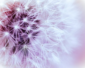 Dandelion Fuzzy Dreamy Botanical Nature Photography Pastel Pink Soft Dreamy Nursery Decor Flora Wish, Fine Art Print
