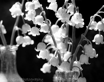 Lilies of the Valley Spring Flora Black and White Botanical Simple Style Nature Photography Natural History,  Fine Art Print