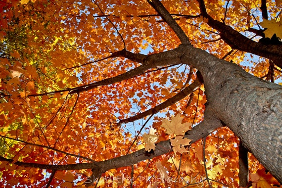 Fall Autumn Trees Woodlands Inkblot Yellow Orange Red October November Dreamy Nature Photography, Fine Art Print