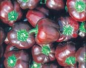Pepper - Mini Chocolate Bell - Heirloom -20 Seeds