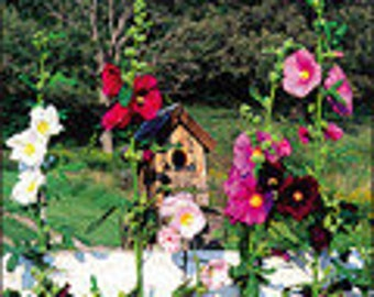 Hollyhock - Outhouse  Beautiful Heirlooms Organic 25 Seeds