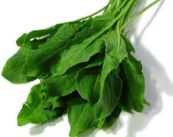 Sorrel Herb - Heirloom - Organic - 50 Seeds
