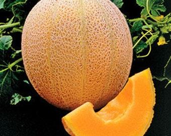 Cantaloupe - Hales Best - Heirloom - 20 Seeds