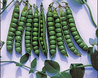 Pea - Green Arrow - Heirloom - 30 Seeds - NON GMO