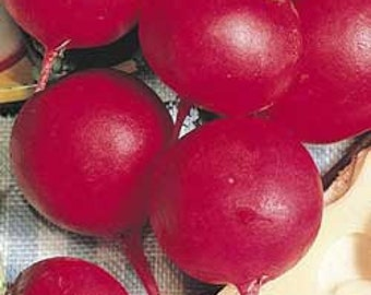 Radish - Crimson Giant - Heirloom - 30 Seeds