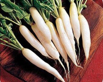 Radish -White Icicle - Heirloom - 25 Seeds