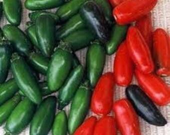 Pepper - Serrano - Heirloom - HOT Wonderful flavor
